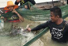 泰拳王子播求化身渔民下水捕鱼,终于明白为何把拳馆搬到乡下了